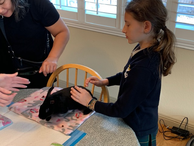 Introduction to Rabbits – Emeryville 4-H